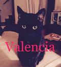 Reyna Valencia image