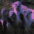 Dead Otter image