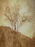 Ruinas/raíces image