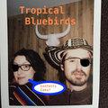 Tropical Bluebirds image