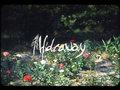 Hideaway image