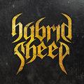 Hybrid Sheep image