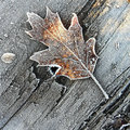 First Frost image