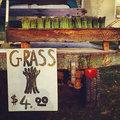 Hadley Grass image