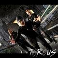 Torous image