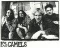 FS Camels image