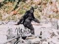 American Ape image