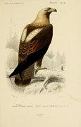 Albatros image