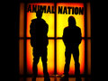 Animal Nation image