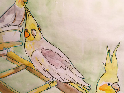 "Original 7"" Parakeet Watercolor w/ handdrawn record and Download of Plasticity main photo"