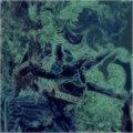 Scolopendra Sound Art image