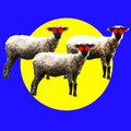Les moutons tondus image