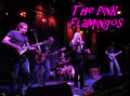 The Pink Flamingos image