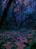 Il Giardino Violetto image
