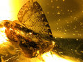 A Moth in Amber image