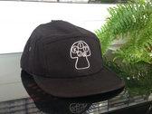 Kit Jr mushroom cap photo