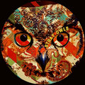 Stray Owls image