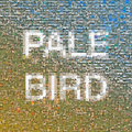 Pale Bird image
