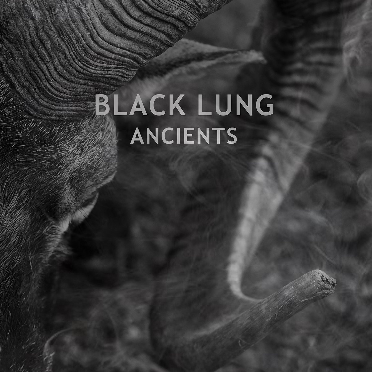 Ancients | Ripple Music