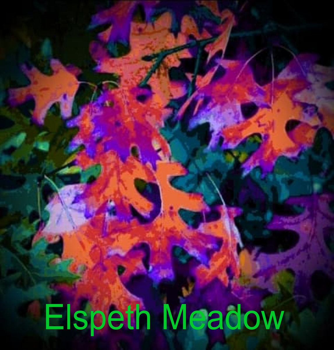 Leafy lane | Evolve