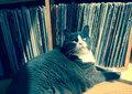 Fur Tuxedo Records image