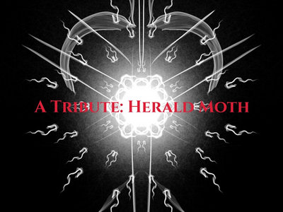 A Tribute: Herald Moth main photo