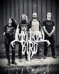 Immortal Bird image