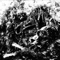 Inoculated Life image