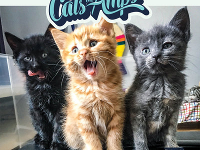 2020 CATS ON AMPS 18-Month Calendar main photo