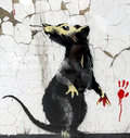 Splat The Rat image