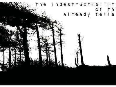 the indestructibility of the already felled t-shirt main photo
