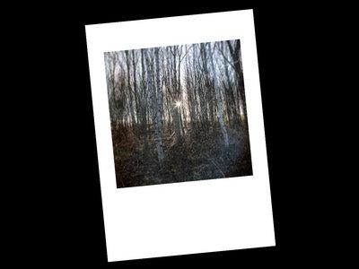 Insight - 600 mm x 425 mm museum quality print main photo