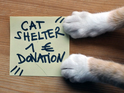 Cat Shelter [Otis Foundation] 1€ Donation main photo