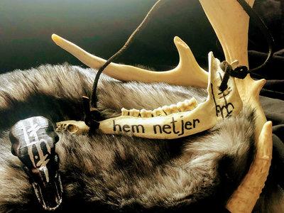 Medium Deer Jawbone 001 main photo