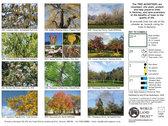 Hackney Trees Calendar 2021 photo