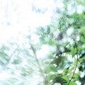 Akisai image