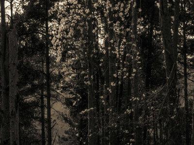 Francois Dillinger - Icosahedrone [LP] main photo
