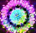 JellyBear image