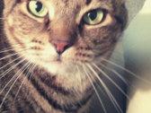 Cats 'N Celts USB (1995-2010) photo
