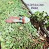 Demo (EP) Cover Art
