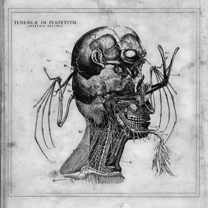 tenebrae in perpetuum black metal