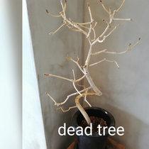 Michiru Aoyama「Dead tree」 cover art