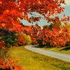 Fall/Asleep Cover Art