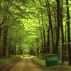 The Green Piano Cover Art