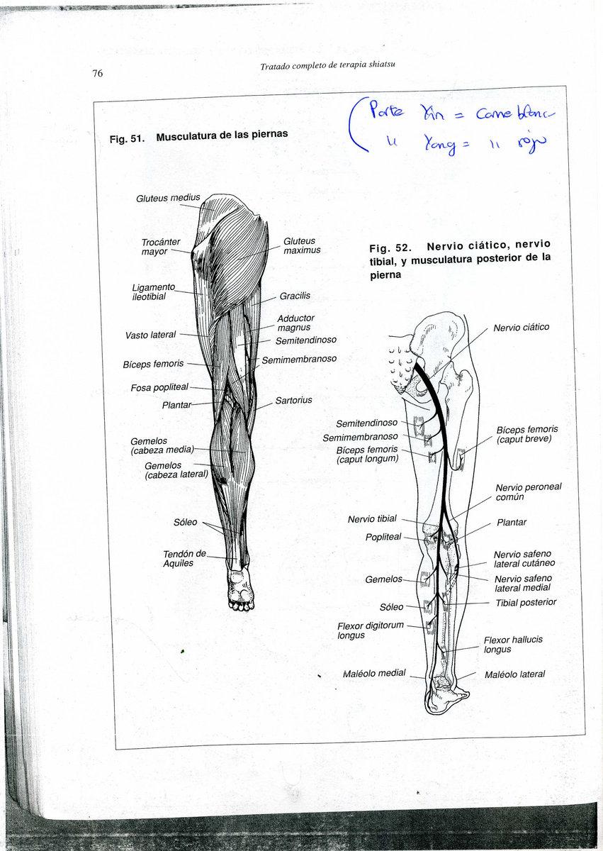 Circulacion Renal Fisiologia Pdf Download | inytnepoge