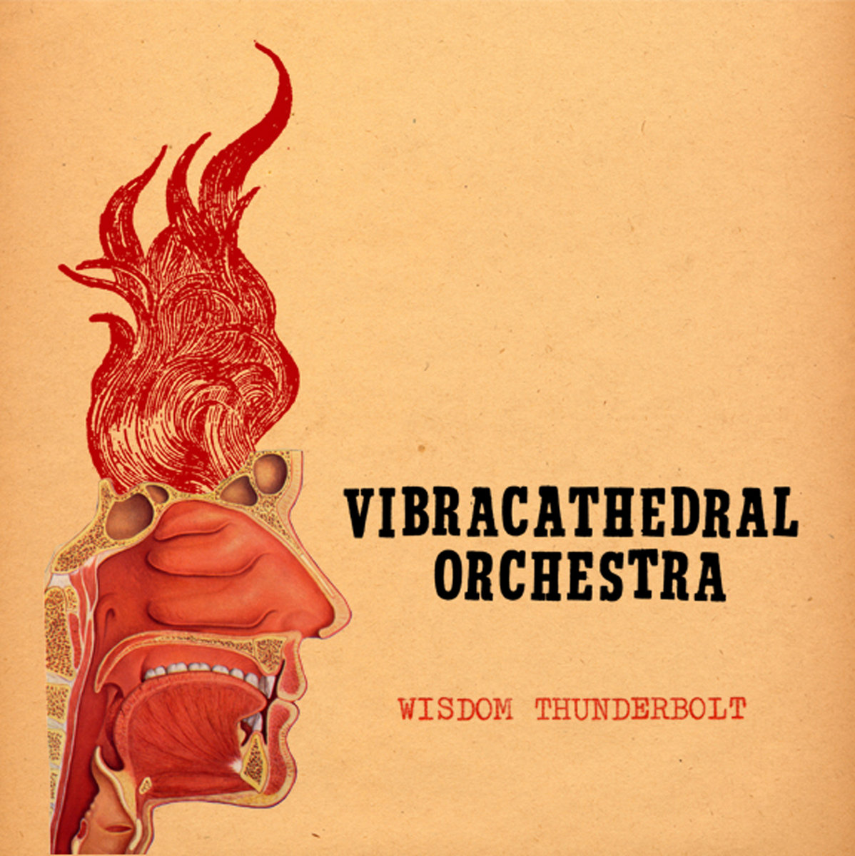 What!!! | Vibracathedral Orchestra