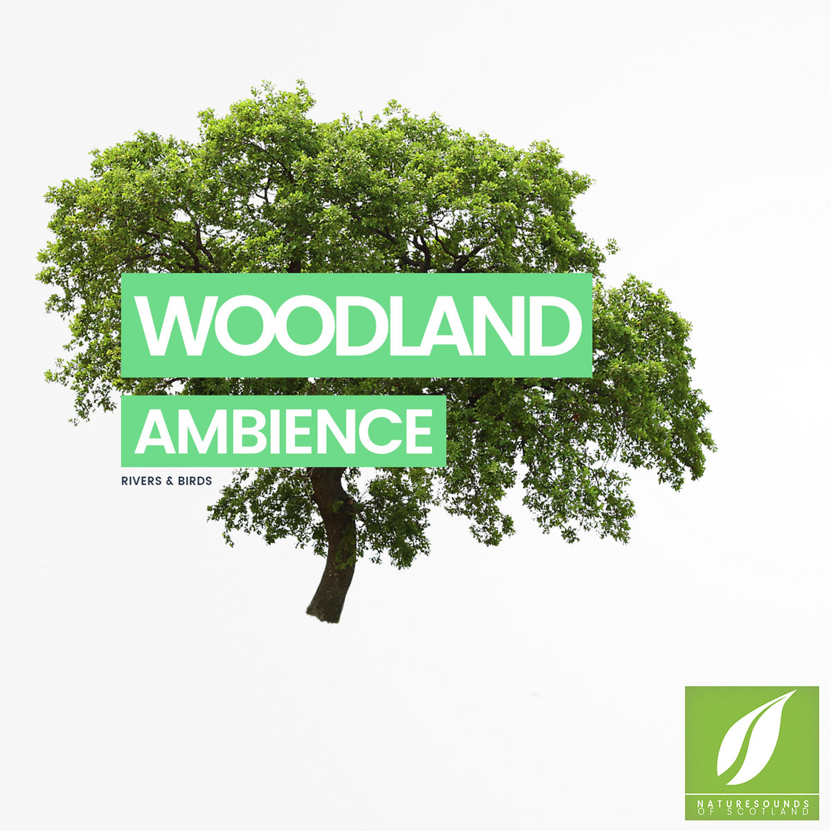 Woodland Ambience Relaxing Nature Sounds For Studying