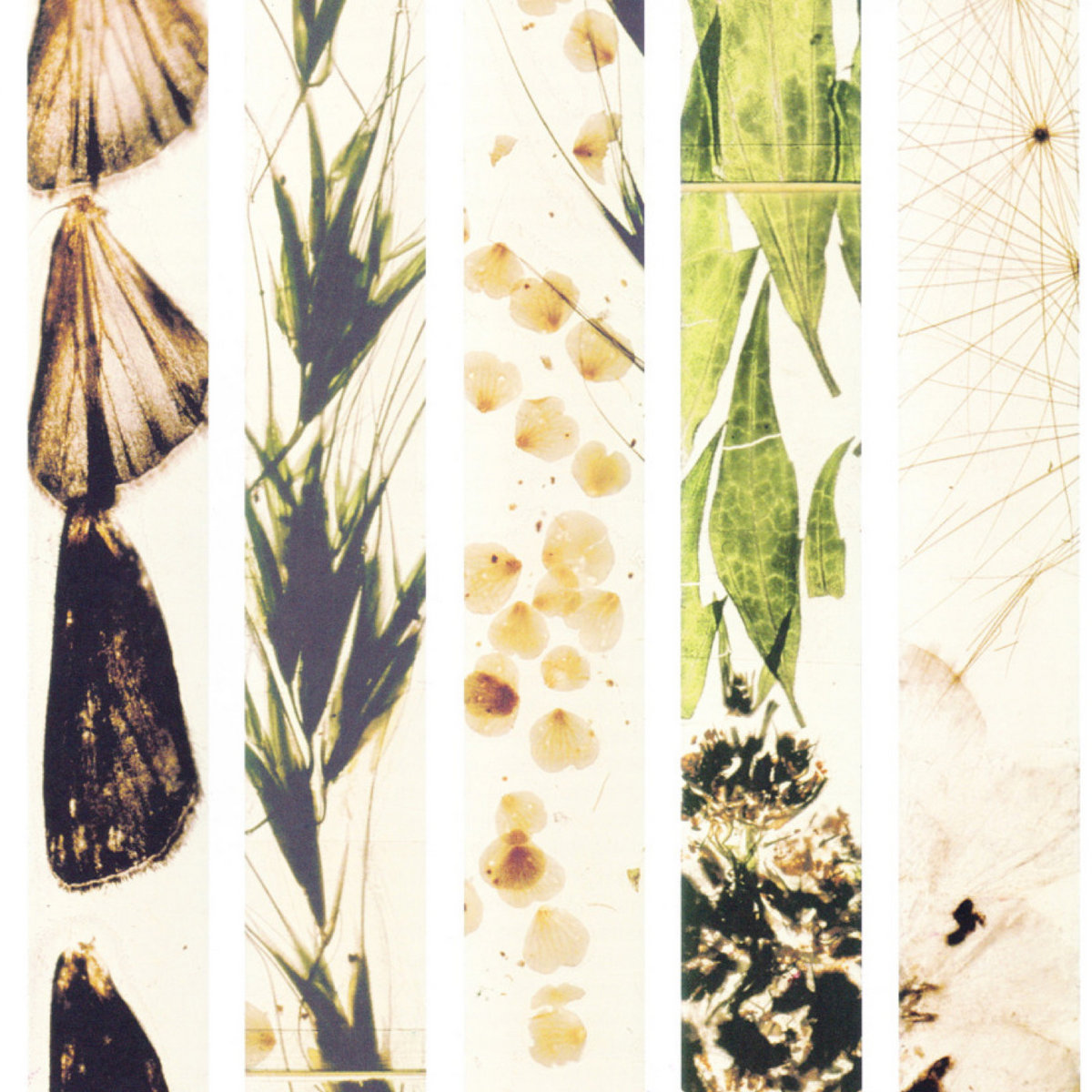 Image result for mothlight