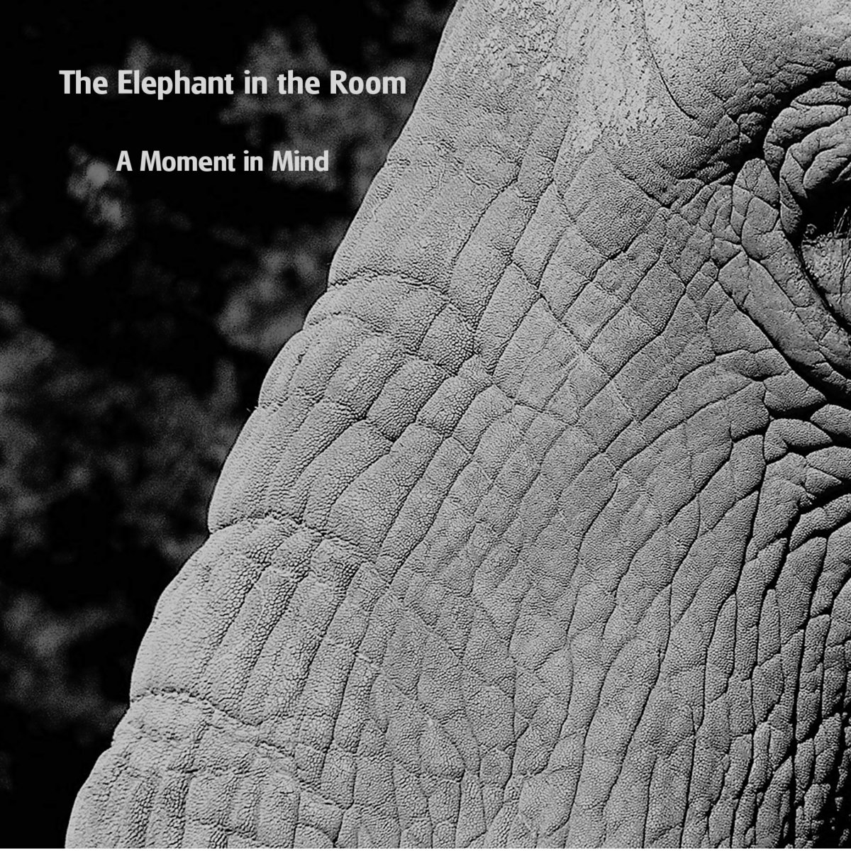 Elephant In Room That Needs To Be >> This Has To Be A Dream Or A Nightmare The Elephant In The Room