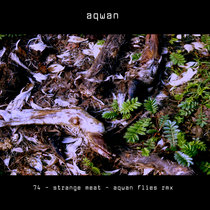 strange_meat 74 aqwan flies remix cover art